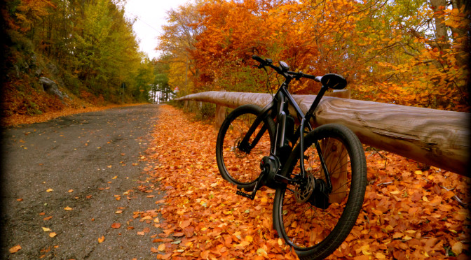 ebike in autumn